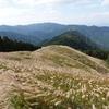 岩湧山【大阪府 ダイヤモンドトレール】~関西では有名なススキがなびく高原。大阪平野を一望する眺望、金色のススキ原、キノコが豊かに、秋の流れを全て包み込む秋晴れの山~【2020年10月】