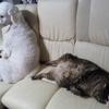 猫ちゃんの乳腺腫瘍の予後