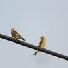 朝活鳥見と換羽中の野鳥😚