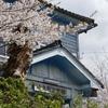レトロな洋風建築と桜