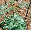 植物の成長って凄い!