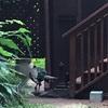 マウイ島  鳥たちの楽園の聖地