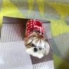 【シニア犬・老犬】愛犬のボケの症状と対策方法!【犬の認知症】
