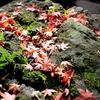紅葉の殿ヶ谷戸庭園、クルミドコーヒーを巡る国分寺休日充実コース