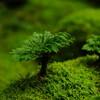雨の日は雨の日なりの被写体を撮りに行く。苔の森がいい感じ
