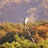 一日一撮 vol.406 讃岐富士(大)と謎の鳥