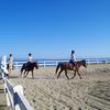 粟島観光のススメ2:海を見ながらホーストレッキングができるあわしま牧場