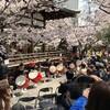 天孫神社 桜祭り🌸