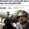 海に愛犬を連れて行ったがために『塩水中毒』に!海に連れて行くときは2時間以内にして30分ごとに新鮮な水を!!