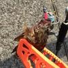 【釣果】東扇島西公園で釣り初心者が4時間粘った結果