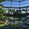 まるで熱帯のジャングル!?伊豆・熱川バナナワニ園の見どころ