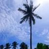 フィリピン、サーフトリップ、eastern Sammr(その2)