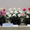 「大阪ばら祭 2017」二日目その3(10本組花 香り花)