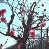 春分の日を前に片付け&オリジナル曲「桜」作曲ちう