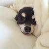 愛犬のフケが多い!フケがでる原因と対策をご紹介!