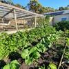 【家庭菜園】コロナのせいで家庭菜園ブーム到来?!外出自粛ならば家庭菜園始めてみるのもあり!
