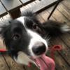 犬の混合ワクチンの価格と種類。ボーダーコリーには何種が適正?