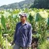 鹿児島の里芋農家さん