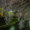 桜吹雪の舞う中で・・・