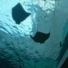 【名古屋】名古屋港水族館で子どもの興味を深めて成長を手助けする方法