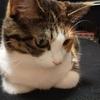 【愛猫日記】毎日アンヌさん#311