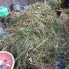 ご近所で草刈りしてたので貰ってシュレッダーして撒く