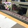 居眠るヒトと、そのワンコ〜イヌは1番古い人類の友だち〜(*´꒳`*)ヌホッ❤︎