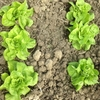 畑で体を動かせば、体も心もスッキリ!おいしい野菜までついてくる。
