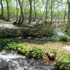春。残雪と新緑の鶴間池にて