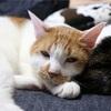 猫のセカンドオピニオン(かかりつけの獣医に不信感を持ったら)