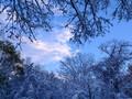 雪のち雨のち雪