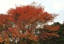 【登山】六甲山上は一足早く紅葉が見頃-六甲高山植物園