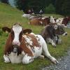 アルプスの少女(?)ミリアムの山小屋。山岳リゾート・アローザですごすスイスの秋(3)
