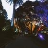 夜のボタニックガーデン