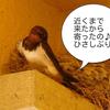 友人が訪ねてくる。 ペットを紹介する。 東京国際ギターコンクール