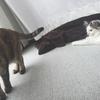 子猫 先住 Rと(ゲージなし)対面