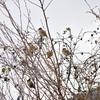 スズメの木・冬の風景