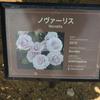 ノヴァーリス 京成バラ園 2016/05/16