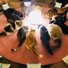 第99回 猫カフェ貸切もふもふ人狼ゲーム会vol.18&猫カフェ貸切もふもふカタン会vol.11レポート