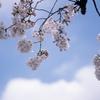 2018年、の桜