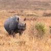 2018年9月30日~10月6日 ケニア旅行記-マサイマラ国立公園(1/5)