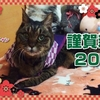 88歳にゃんこのお正月 88-year old cat: 2018 Happy New Year