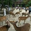 奈良の秘境ツーリング振り返り ~みたらい渓谷~