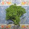 【家庭菜園】ブロッコリー収穫しました。