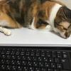 猫の健康診断 危険!要ダイエット宣告!
