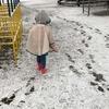 庭の金柑も雪化粧