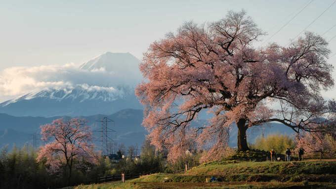 春本番!桜のオススメ撮影スポット9選 – 絶景・夜桜・穴場…カテゴリ別ベスト3と魅力的に写すポイント