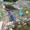 カメ池1号池と2号池を接続してカメトープ(カメ池)完成
