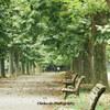 新宿御苑の並木で写真を撮る 2016 その3@東京都新宿区