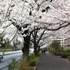 自転車で東京都内のお花見スポットを巡ってみた 2013